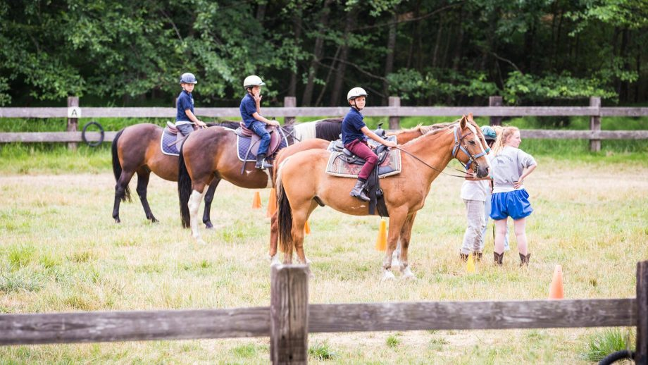 Campers line up horses in paddock
