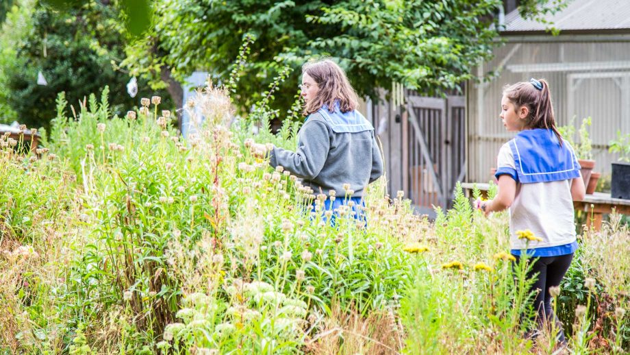 Campers walk through tall plants